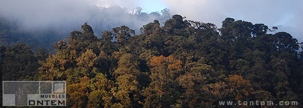 Muebles Tontem supports Chelemha cloud forest reserve.